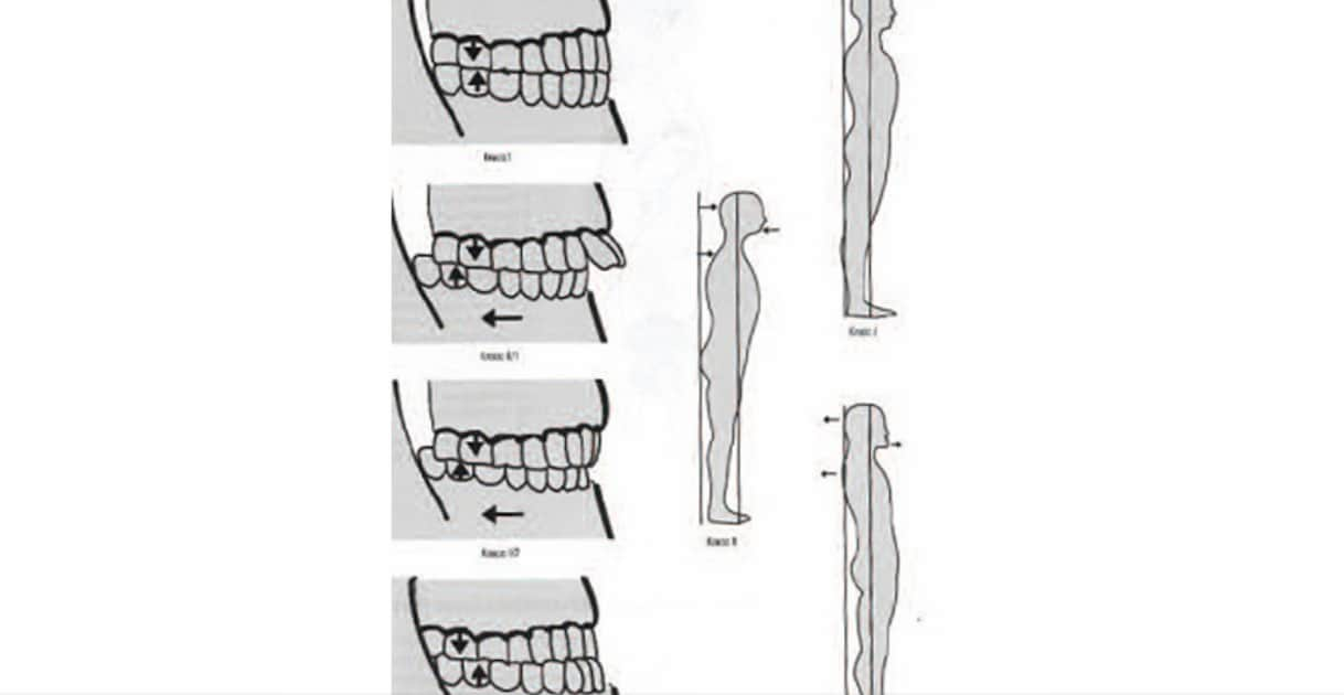 Гнатолог в стоматологии АССА