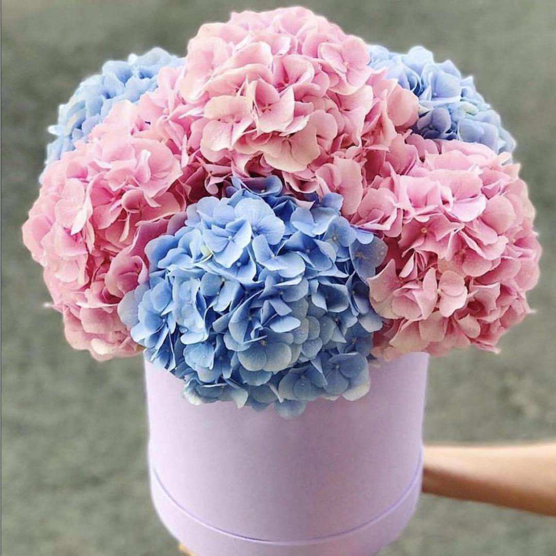 Гортензии микс розовый и голубой в коробке в руках