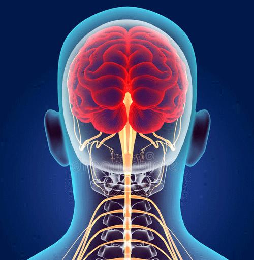 Нервные каналы