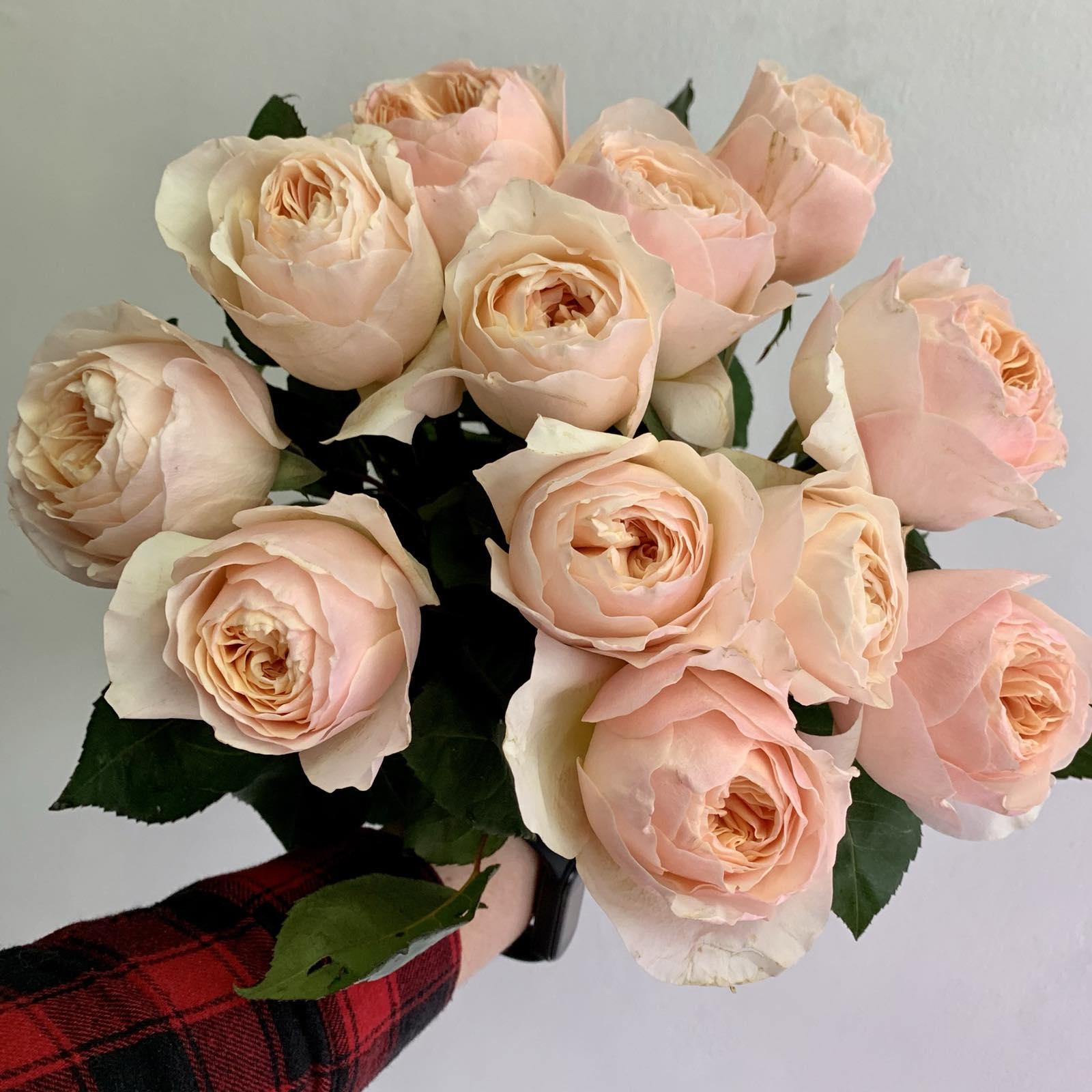 Одноголовая роза Juliet