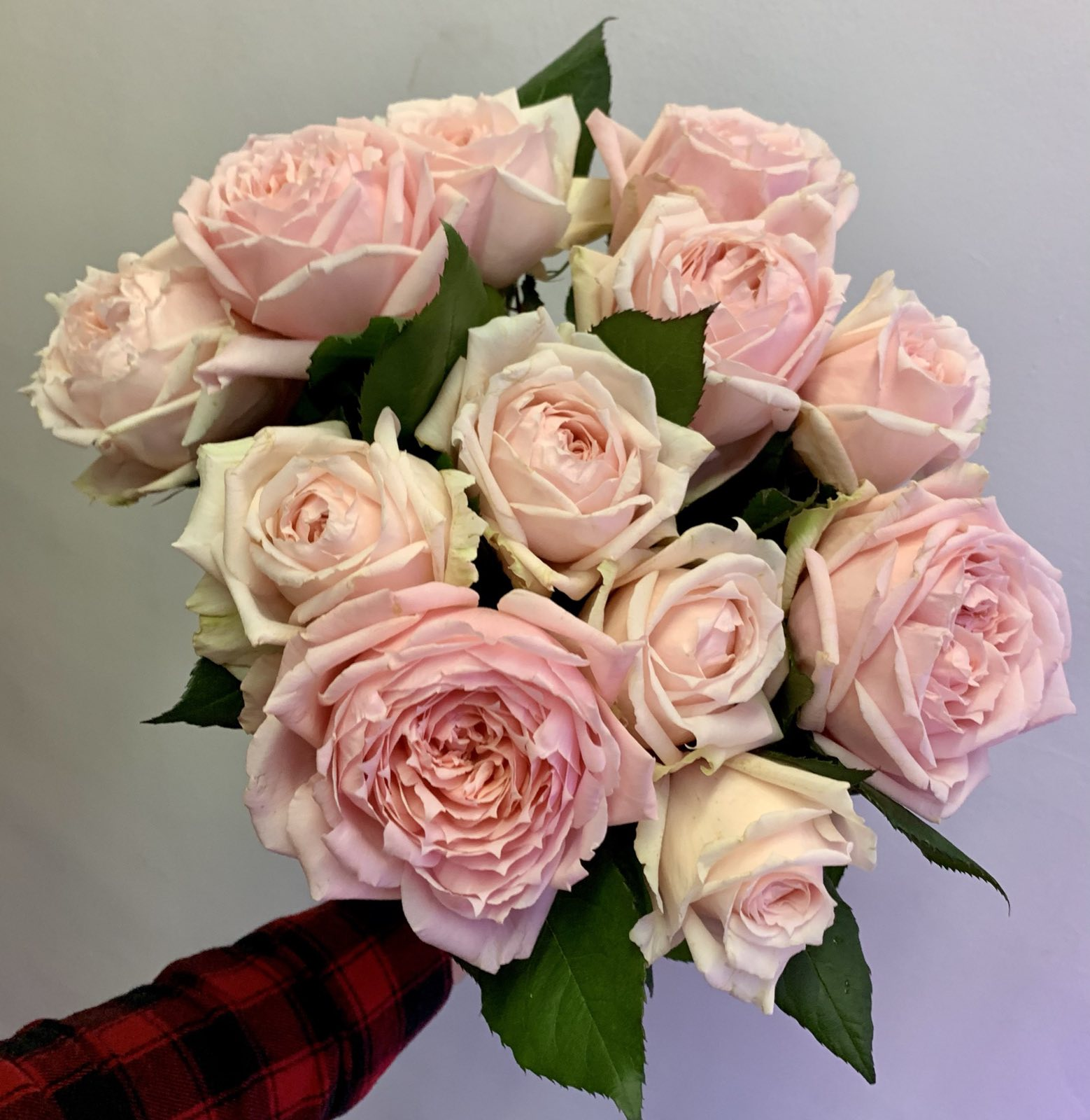 Одноголовая роза Jailyn