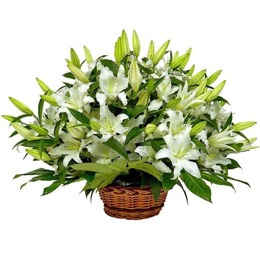 Белые лилии в корзине в руках