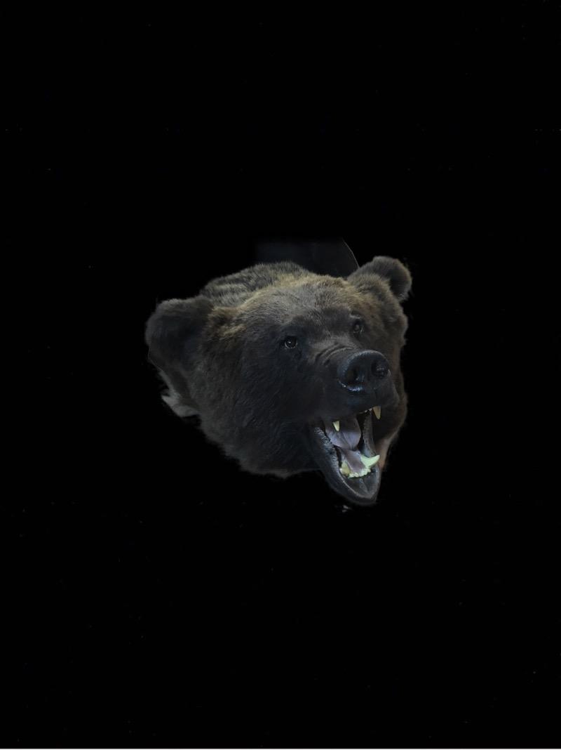 медведь шкура,медведь цена купить,шкура медведь цена
