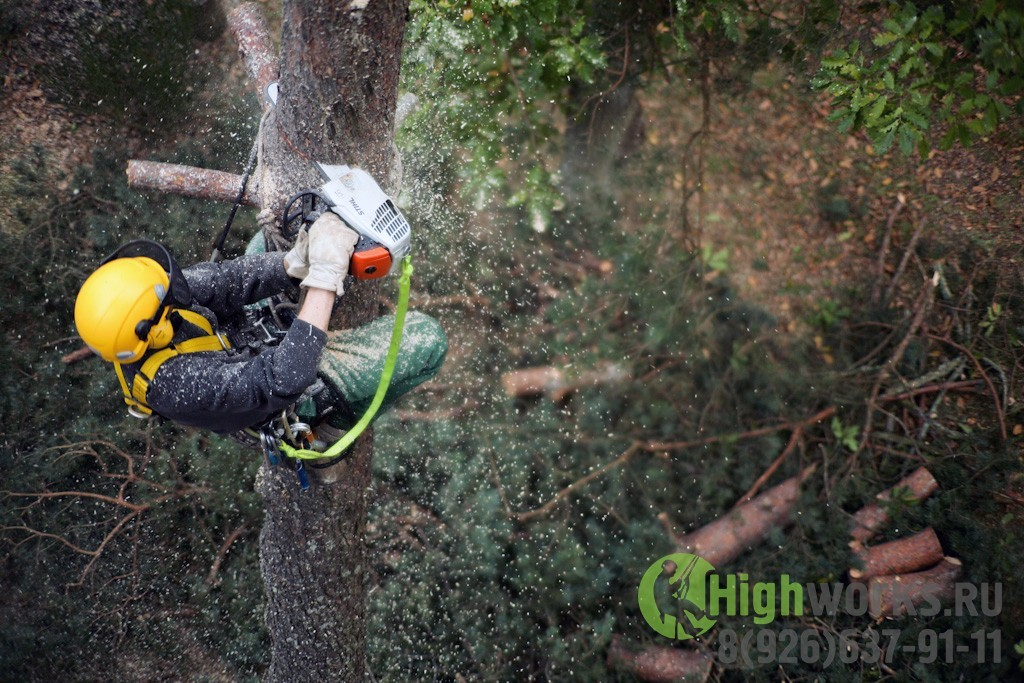 Укрепление деревьев
