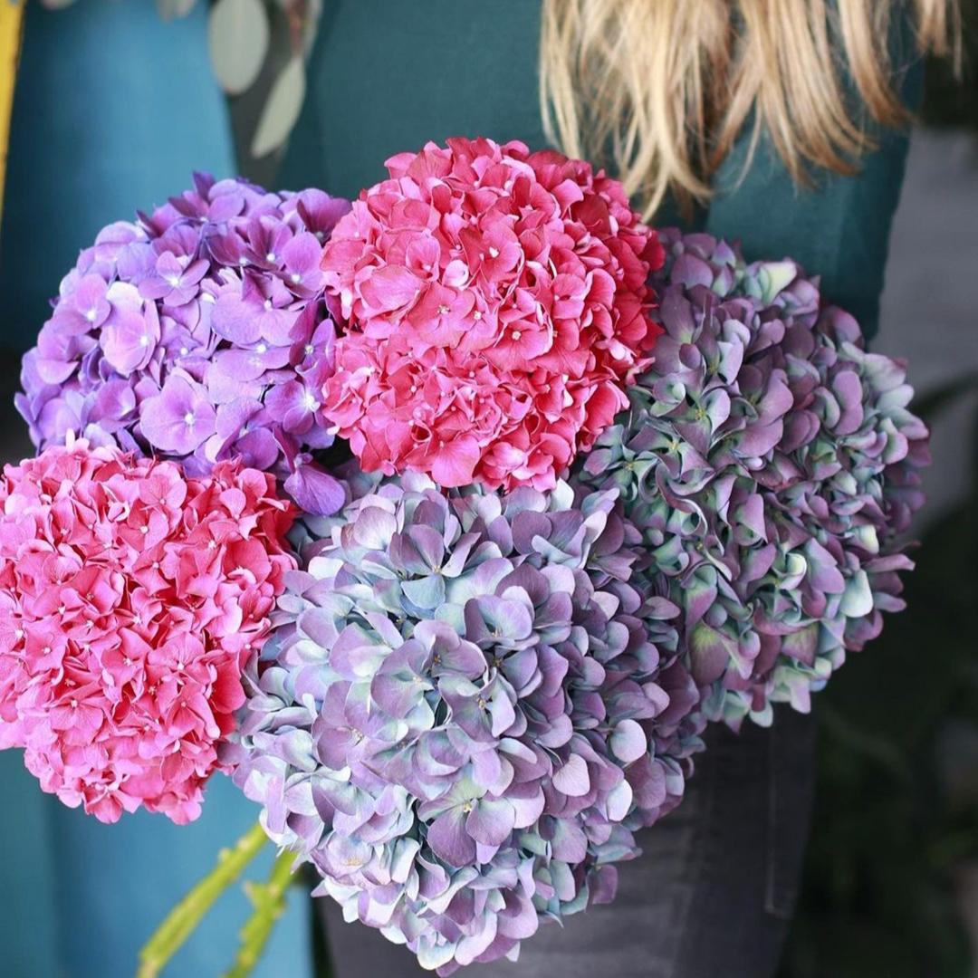 Микс малиновых, фиолетовых и бледно-фиолетовых гортензий в крафте