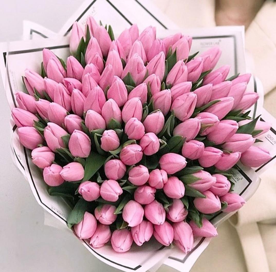 101 розовый тюльпан в руках