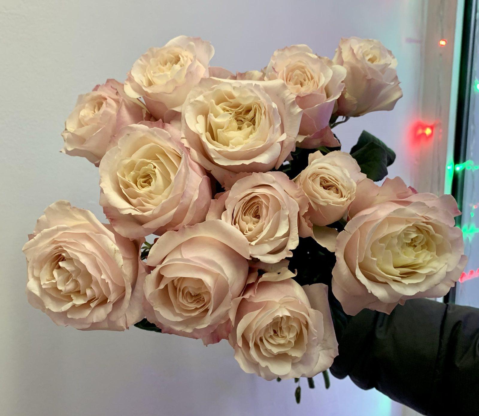 Одноголовая роза Saidy Arrieta
