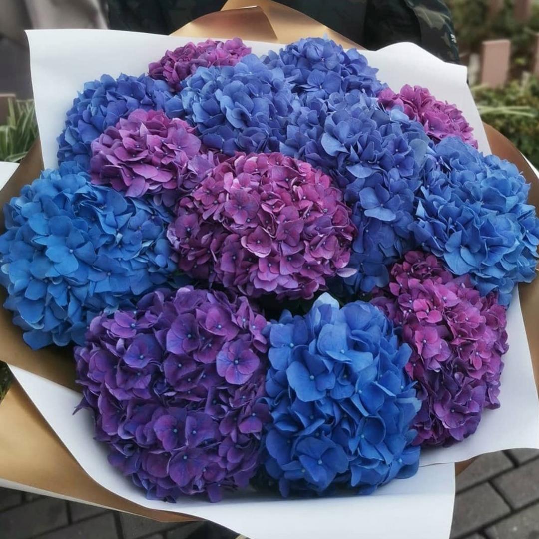 Микс фиолетовых и синих гортензий в крафте