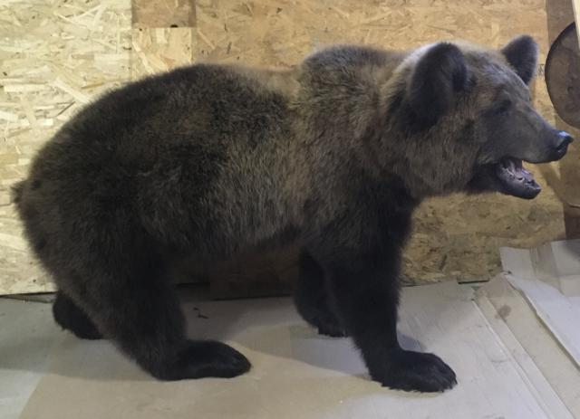 медведь чучело купить