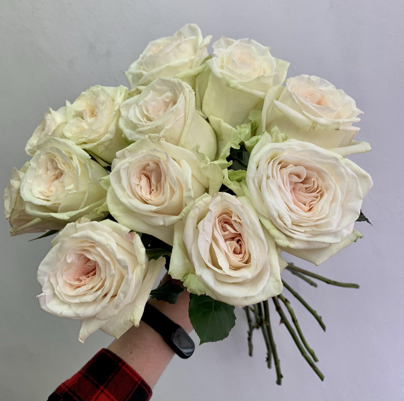 Одноголовая роза Paola Arrieta