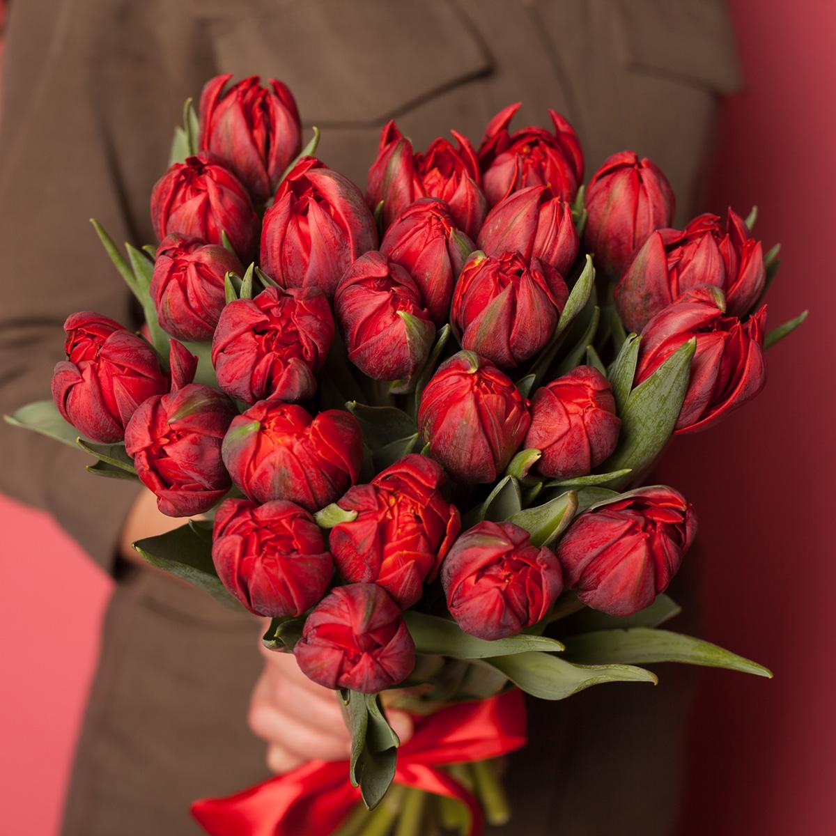 25 тюльпанов Red Prince в руках