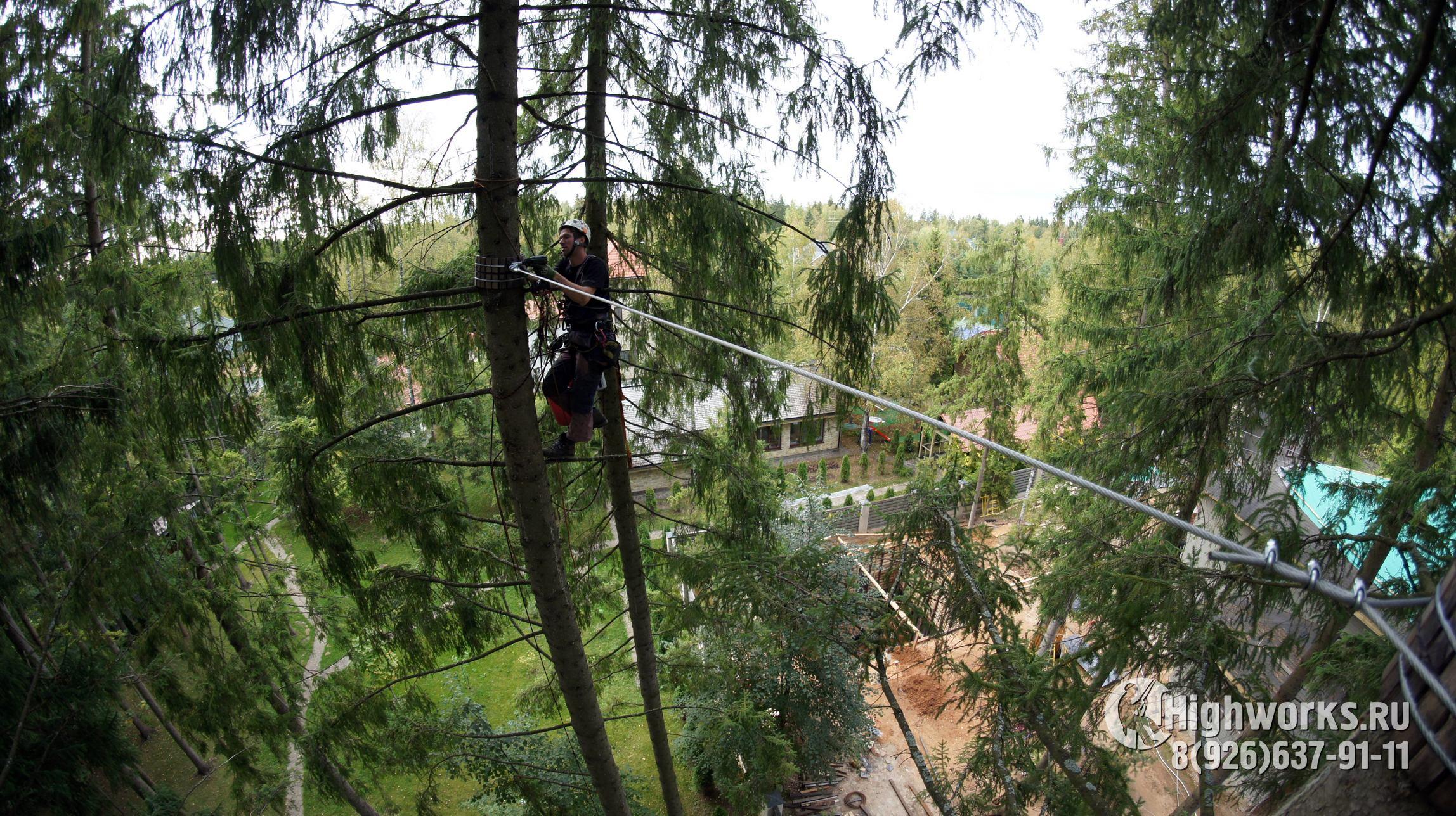 Укрепление деревьев промышленными альпинистами