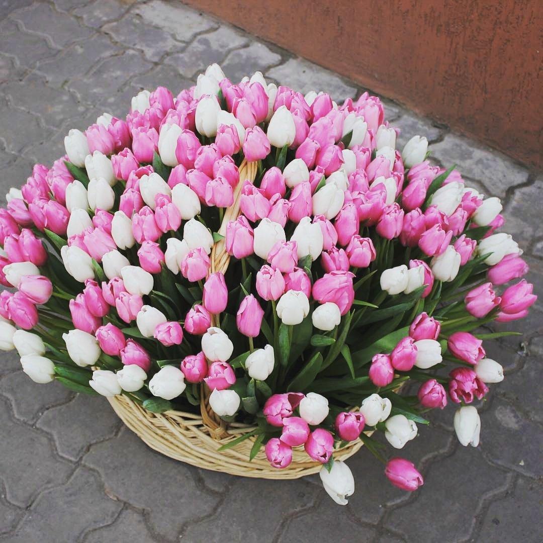 201 тюльпан в корзине в руках