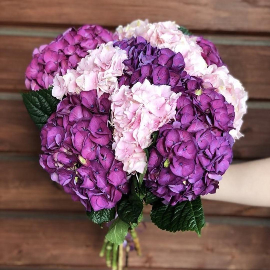 Микс розовых и фиолетовых гортензий в крафте