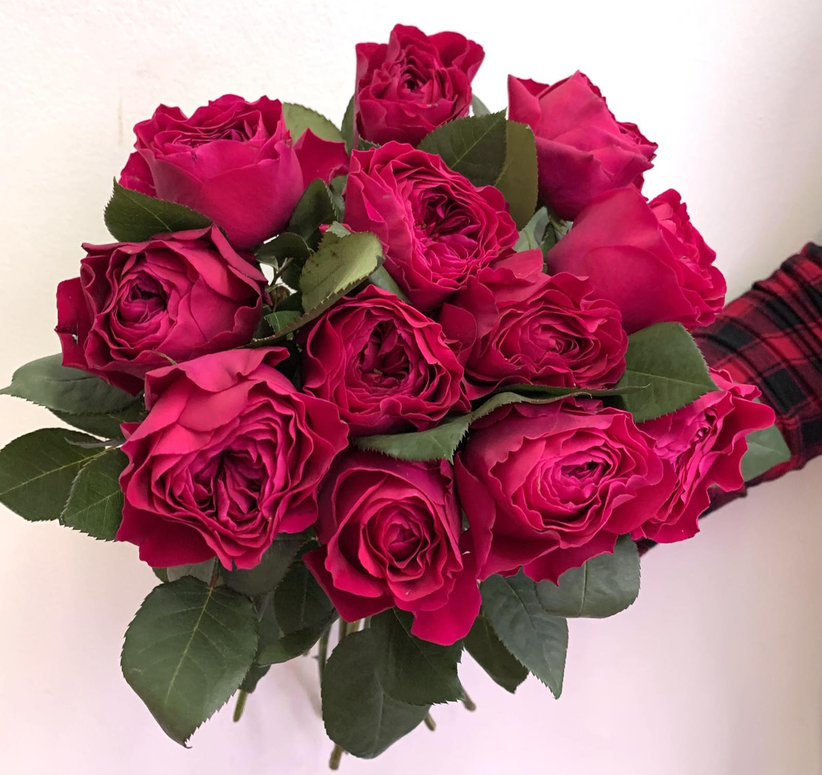 Одноголовая роза Erika