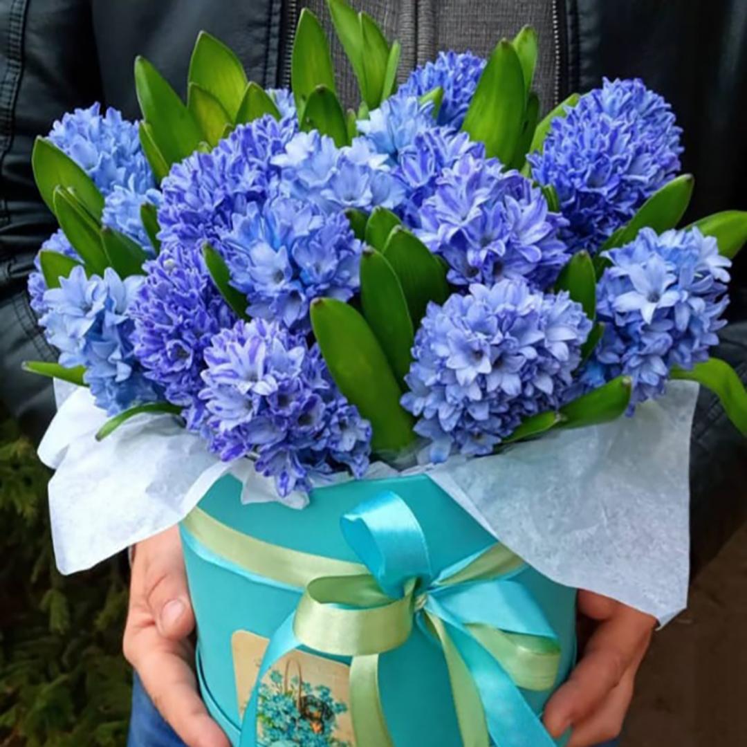 Синие гиацинты в коробке в руках