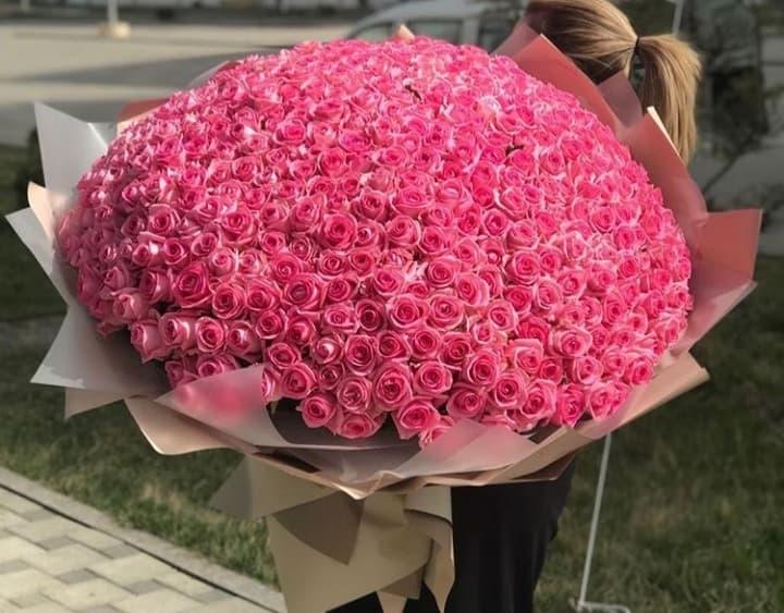 501 роза Аква