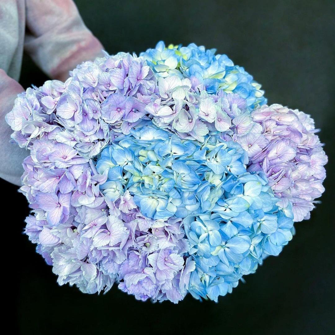 Микс голубых и бледно-фиолетовых гортензий в крафте