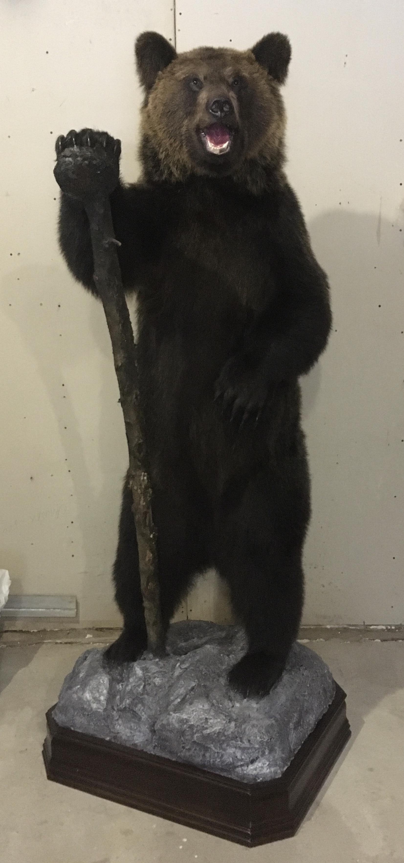 Купить чучело медведя,чучело головы медведя,чучело медведя в полный рост