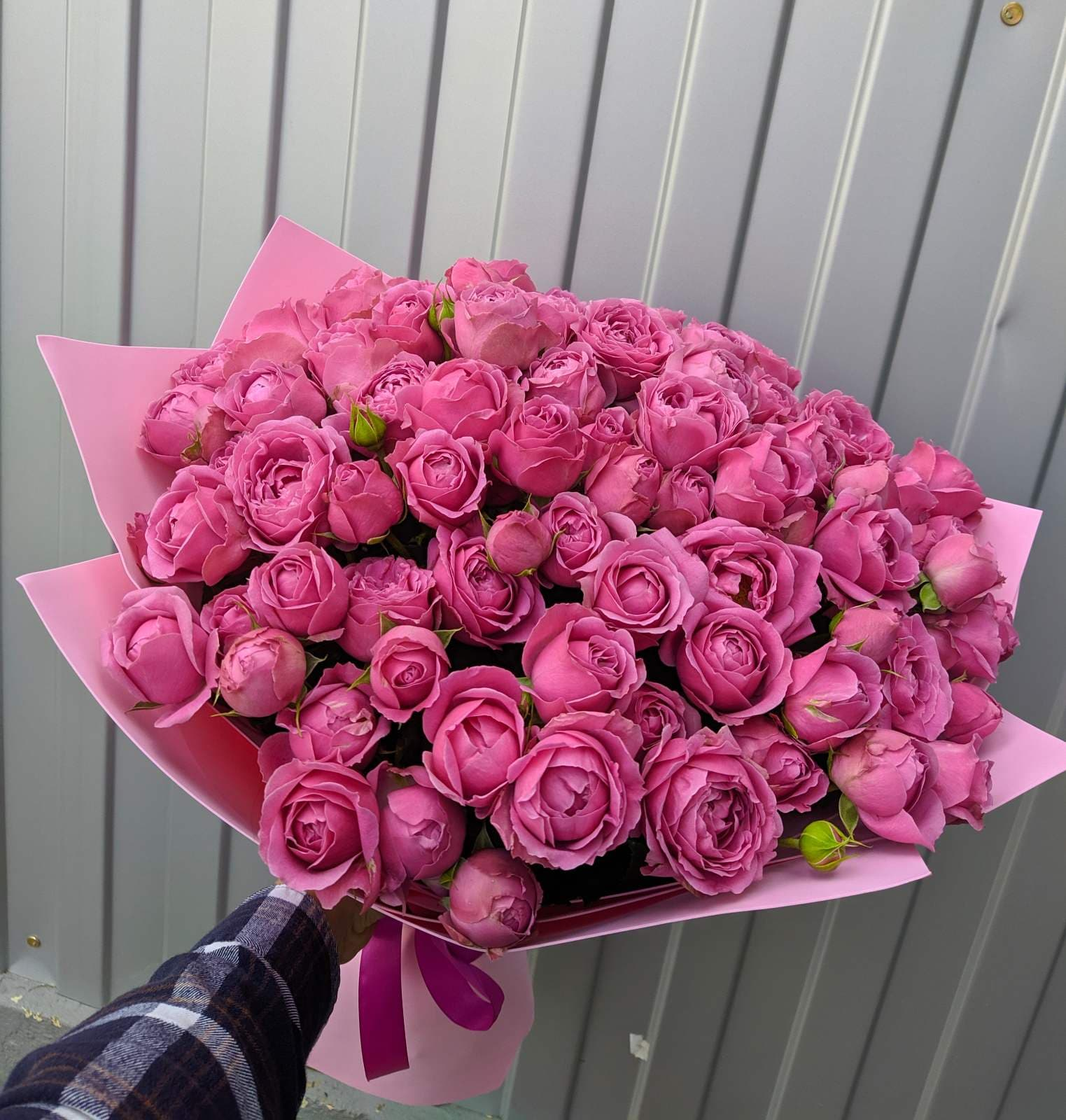 51 пионовидная роза Мисти Баблс