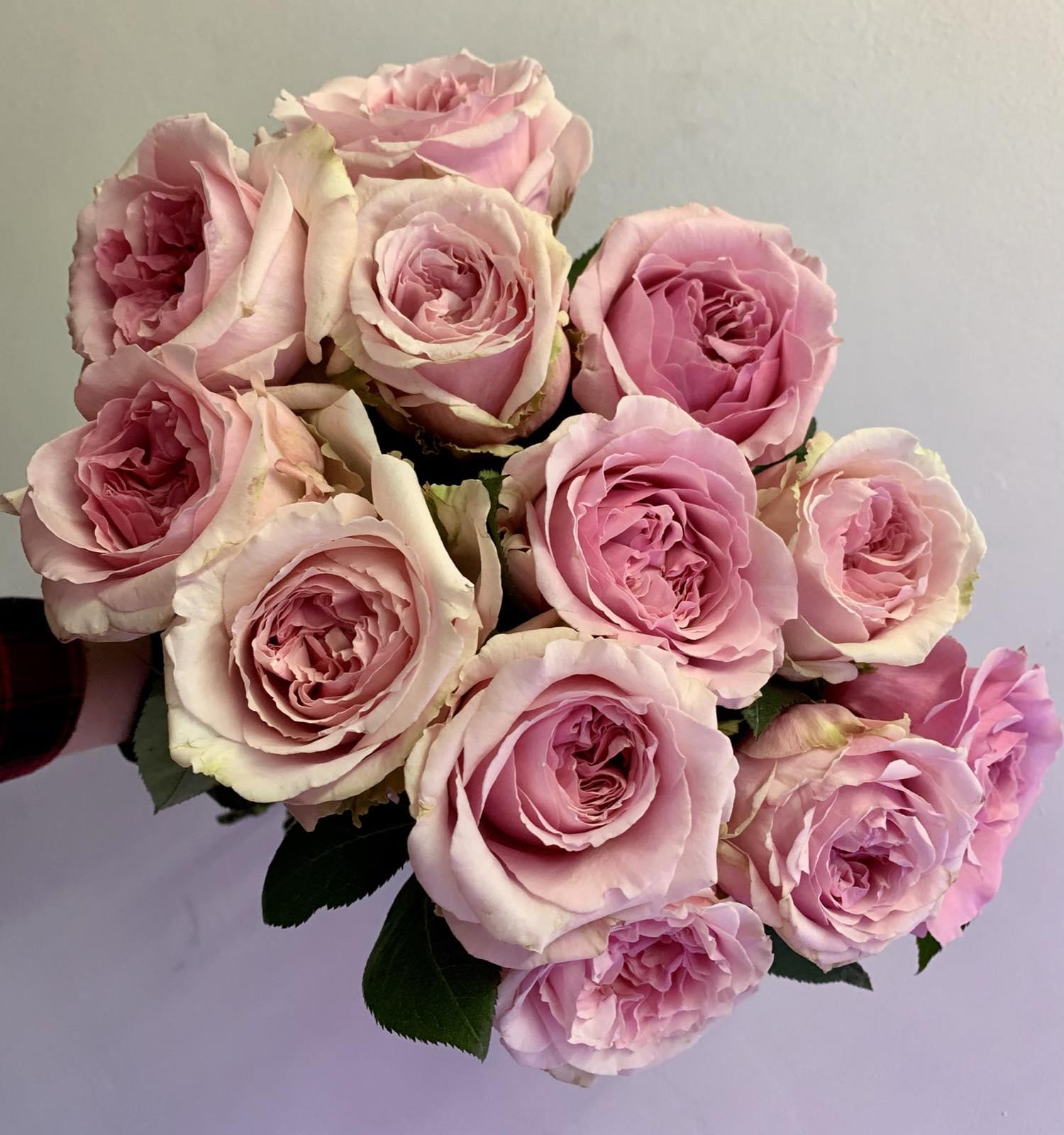 Одноголовая роза Priacess