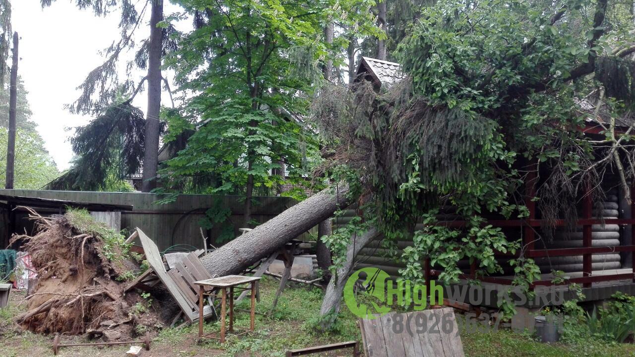 Удаление и укрепление деревьев промышленными альпинистами