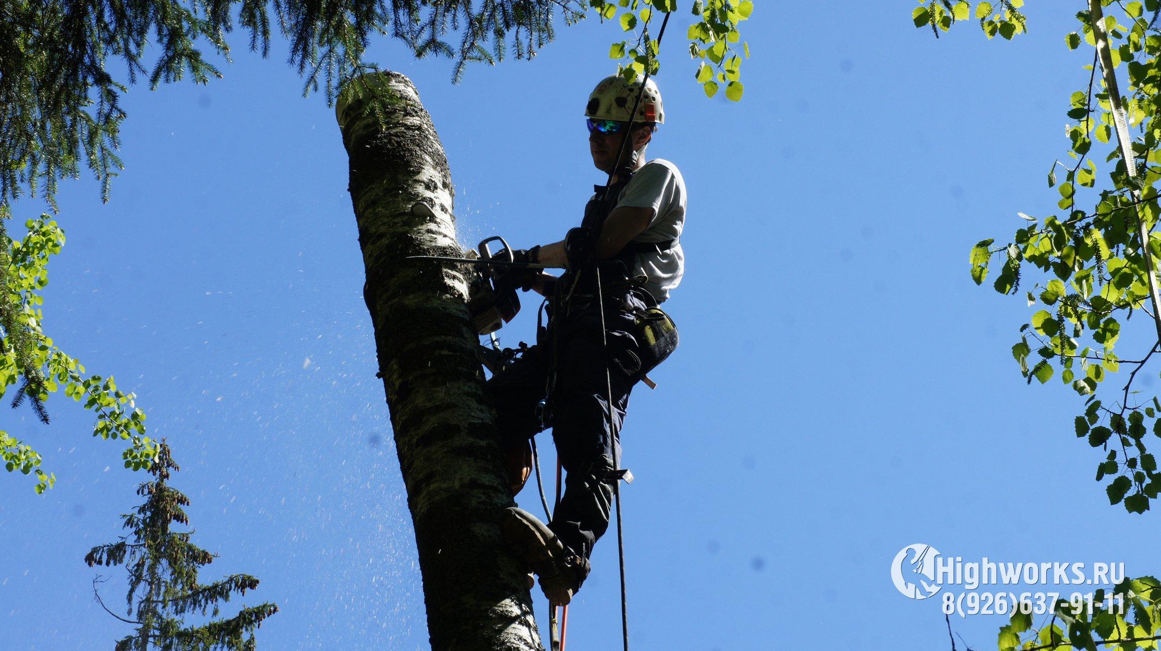 Удаление деревьев промышленными альпинистами
