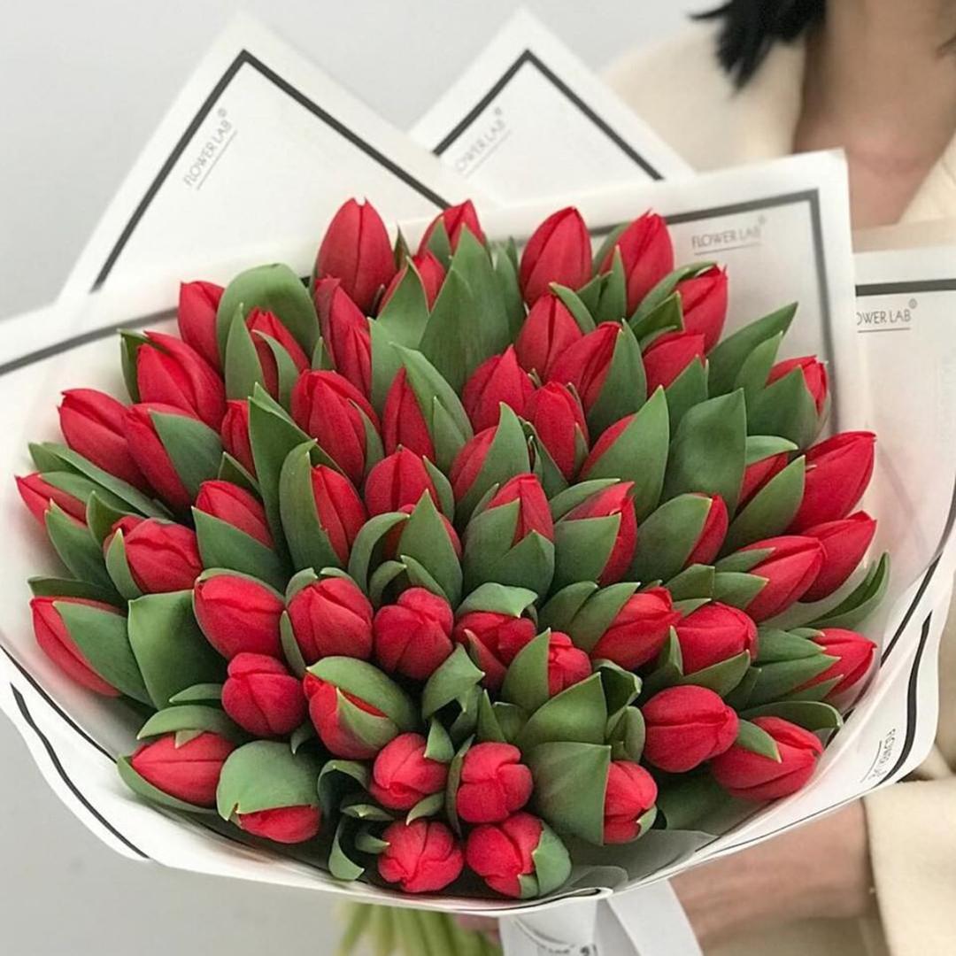 51 красный тюльпан в руках
