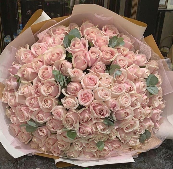 Одноголовые розы Кимберли